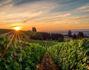 Pacific Northwest Winery Scene